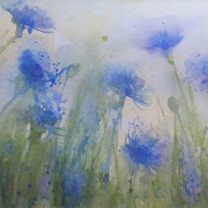 Cornflower field – Greetings Card